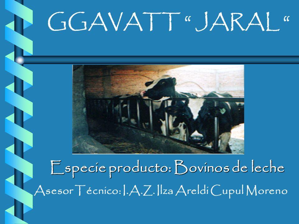 GGAVATT JARAL Especie producto: Bovinos de leche