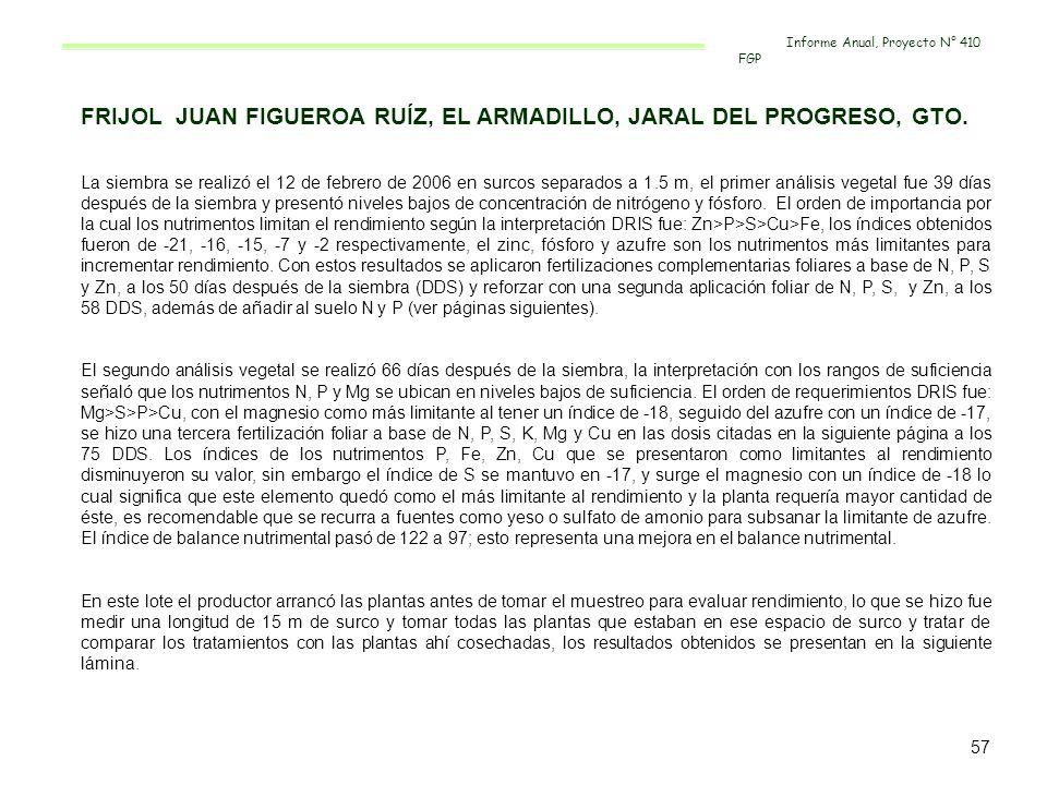 FRIJOL JUAN FIGUEROA RUÍZ, EL ARMADILLO, JARAL DEL PROGRESO, GTO.