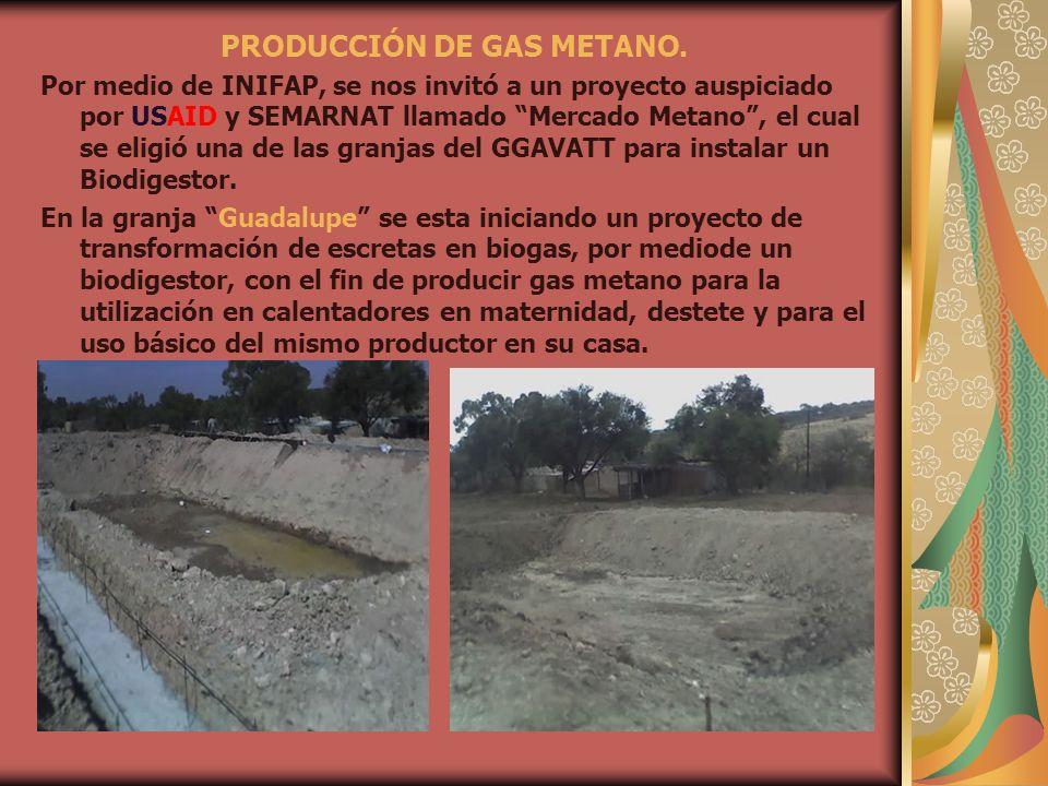 PRODUCCIÓN DE GAS METANO.
