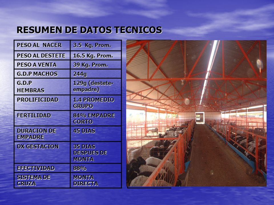 RESUMEN DE DATOS TECNICOS