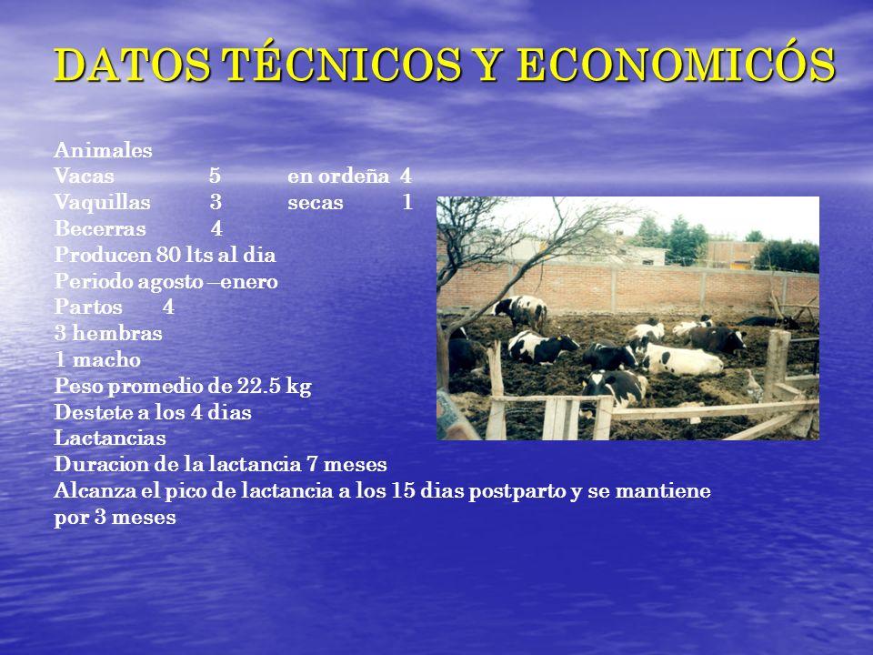DATOS TÉCNICOS Y ECONOMICÓS