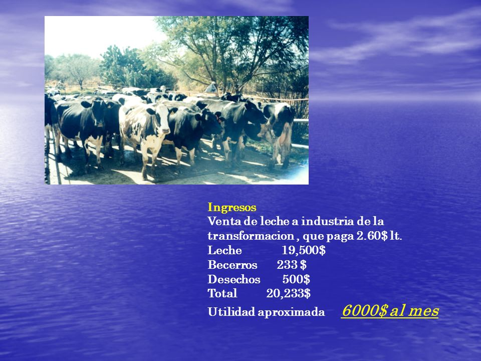 Ingresos Venta de leche a industria de la transformacion , que paga 2.60$ lt. Leche 19,500$
