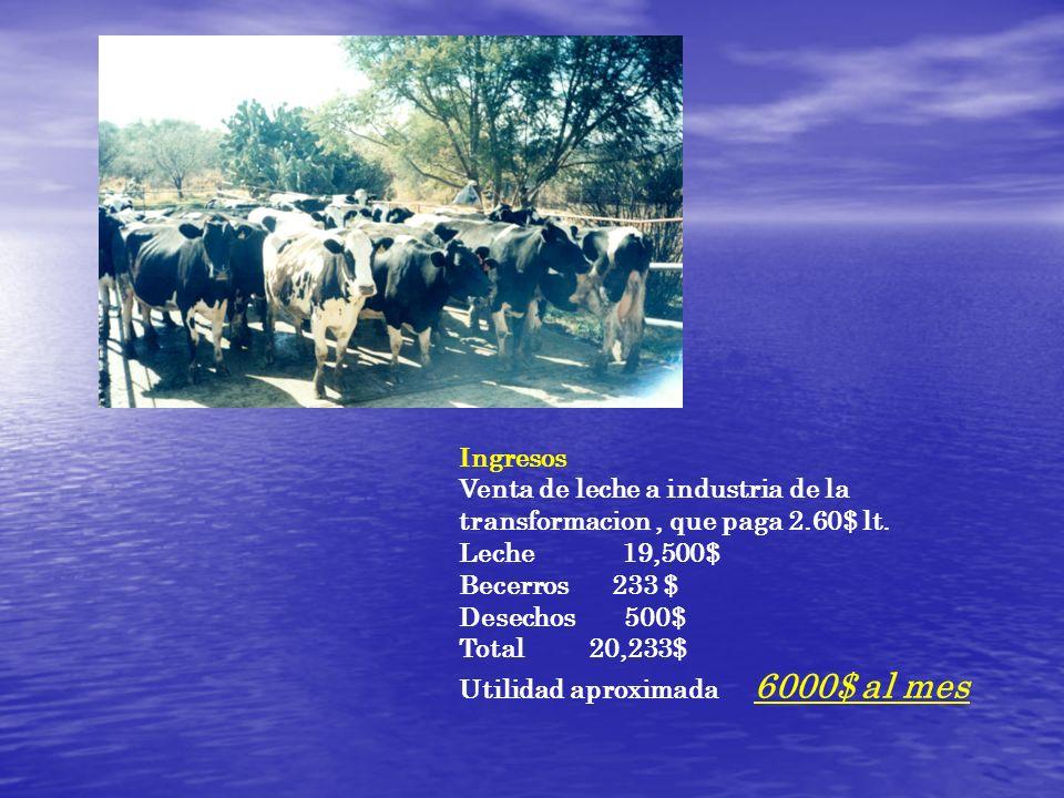 IngresosVenta de leche a industria de la transformacion , que paga 2.60$ lt. Leche 19,500$