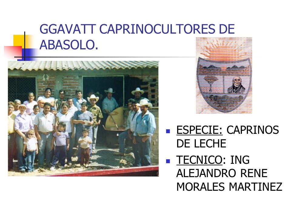 GGAVATT CAPRINOCULTORES DE ABASOLO.