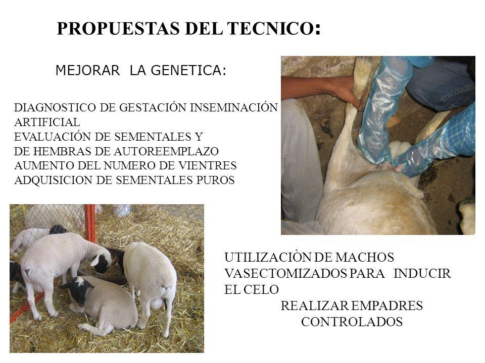 PROPUESTAS DEL TECNICO: