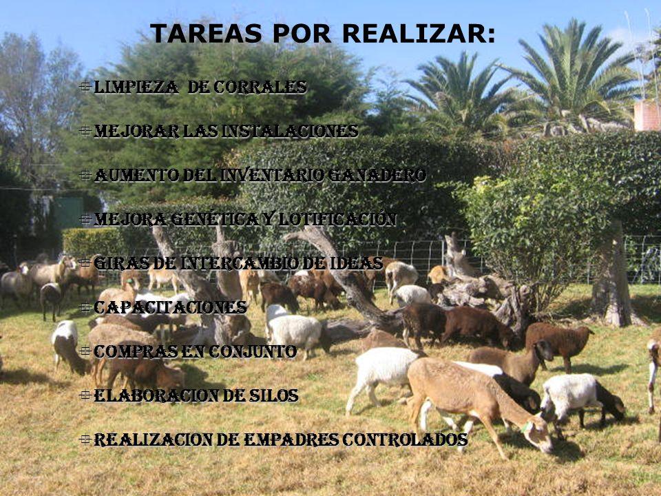 TAREAS POR REALIZAR: LIMPIEZA DE CORRALES MEJORAR LAS INSTALACIONES