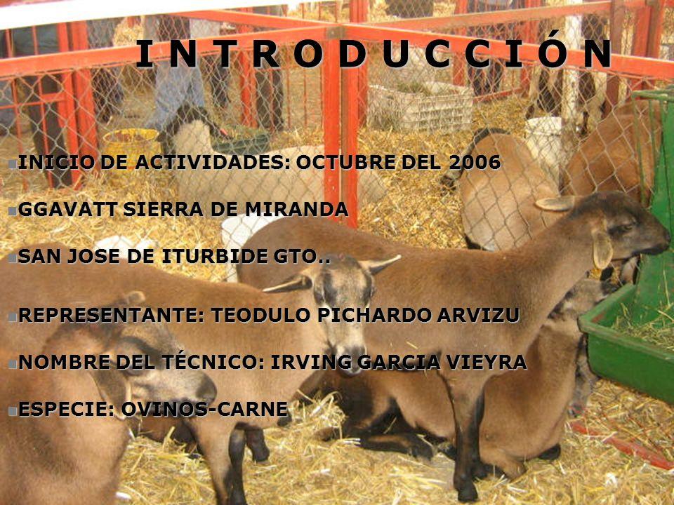 I N T R O D U C C I Ó N INICIO DE ACTIVIDADES: OCTUBRE DEL 2006