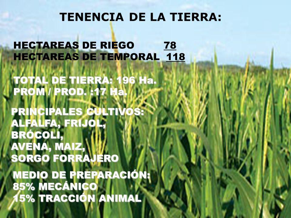 TENENCIA DE LA TIERRA: HECTAREAS DE RIEGO 78 HECTAREAS DE TEMPORAL 118