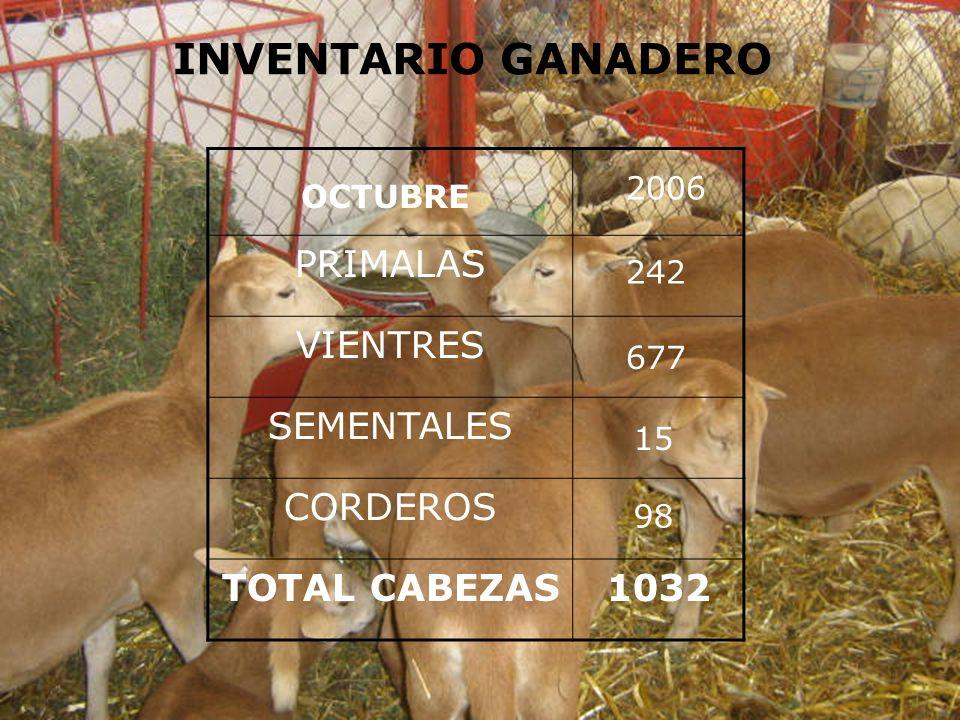 INVENTARIO GANADERO PRIMALAS VIENTRES SEMENTALES CORDEROS