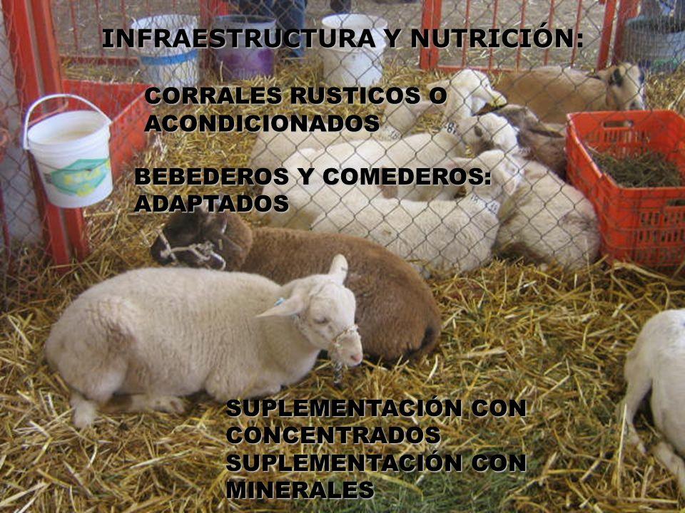 INFRAESTRUCTURA Y NUTRICIÓN: