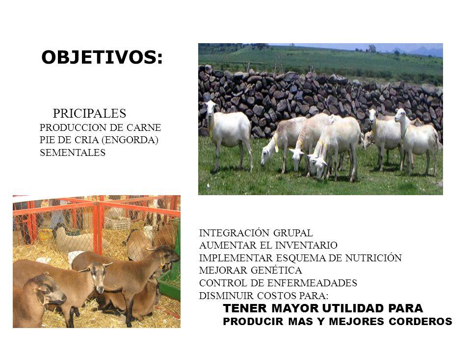 OBJETIVOS: PRICIPALES TENER MAYOR UTILIDAD PARA PRODUCCION DE CARNE