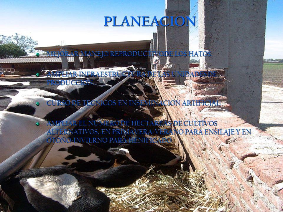 PLANEACION MEJORAR MANEJO REPRODUCTIVODE LOS HATOS.