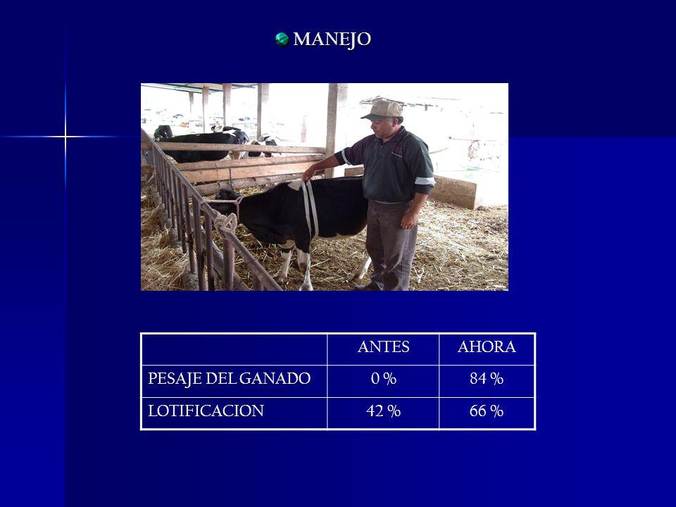 MANEJO ANTES AHORA PESAJE DEL GANADO 0 % 84 % LOTIFICACION 42 % 66 %
