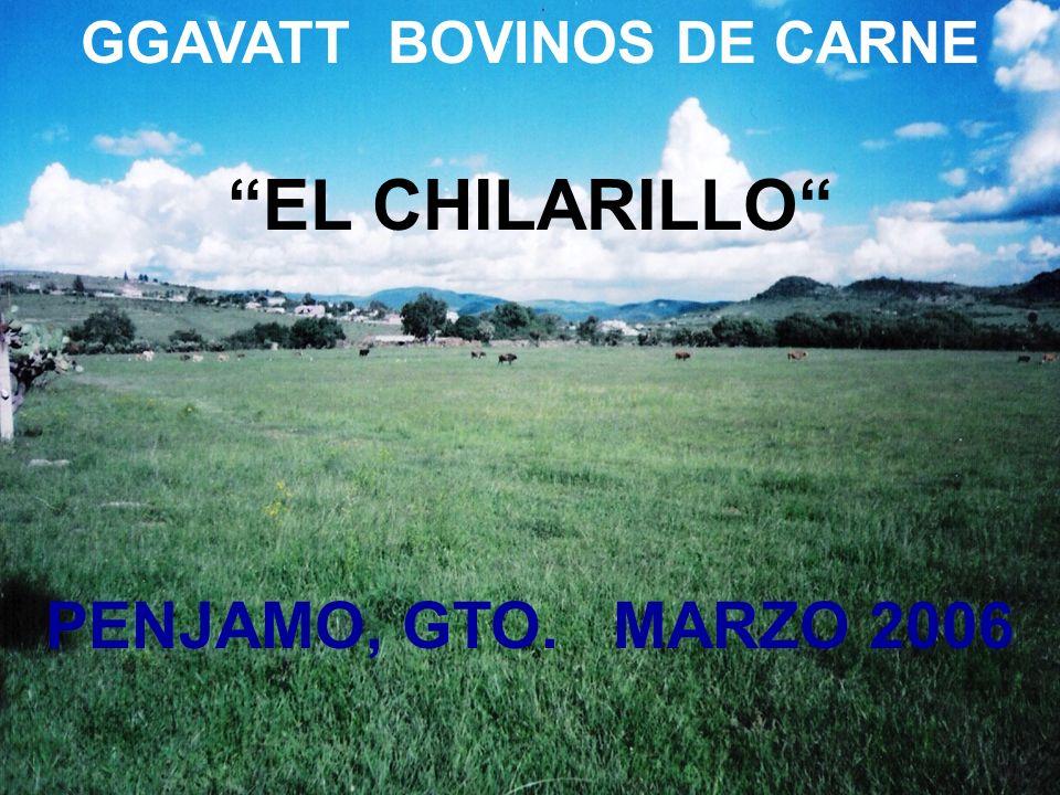 GGAVATT BOVINOS DE CARNE