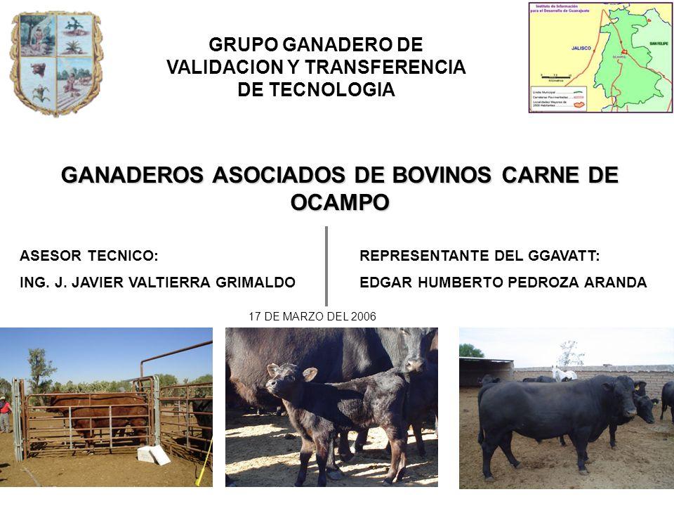GANADEROS ASOCIADOS DE BOVINOS CARNE DE OCAMPO