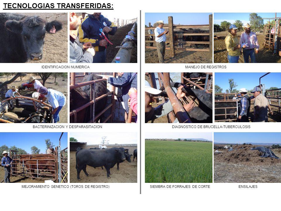 TECNOLOGIAS TRANSFERIDAS: