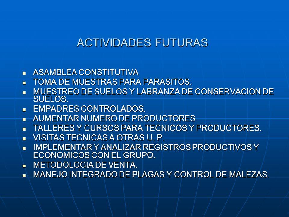 ACTIVIDADES FUTURAS ASAMBLEA CONSTITUTIVA