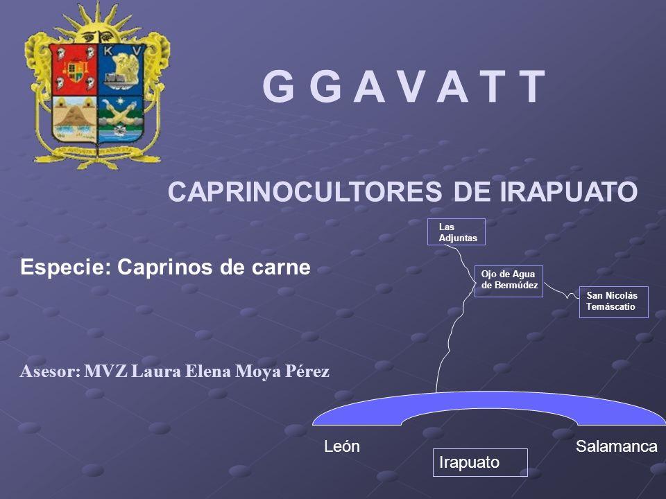 G G A V A T T CAPRINOCULTORES DE IRAPUATO Especie: Caprinos de carne