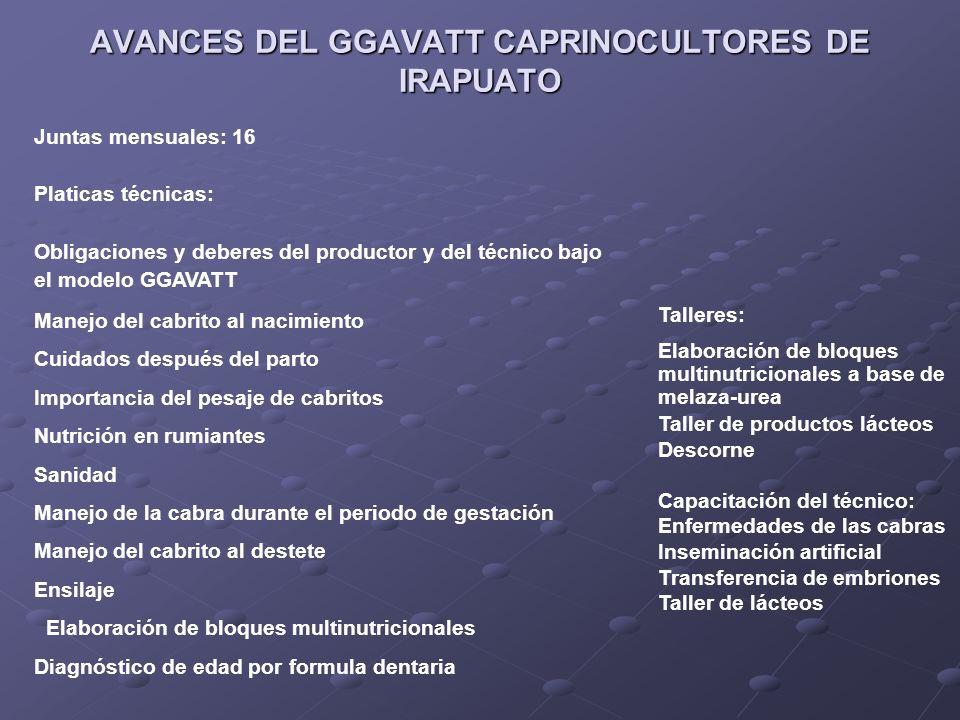 AVANCES DEL GGAVATT CAPRINOCULTORES DE IRAPUATO
