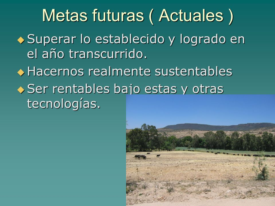 Metas futuras ( Actuales )