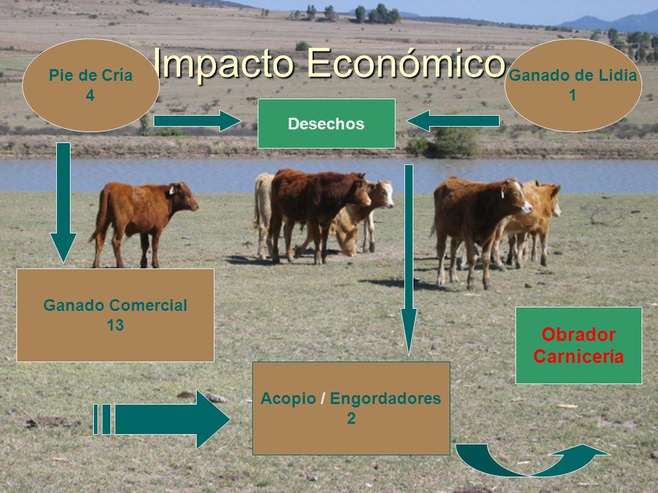 Impacto Económico Obrador Carnicería Pie de Cría 4 Ganado de Lidia 1