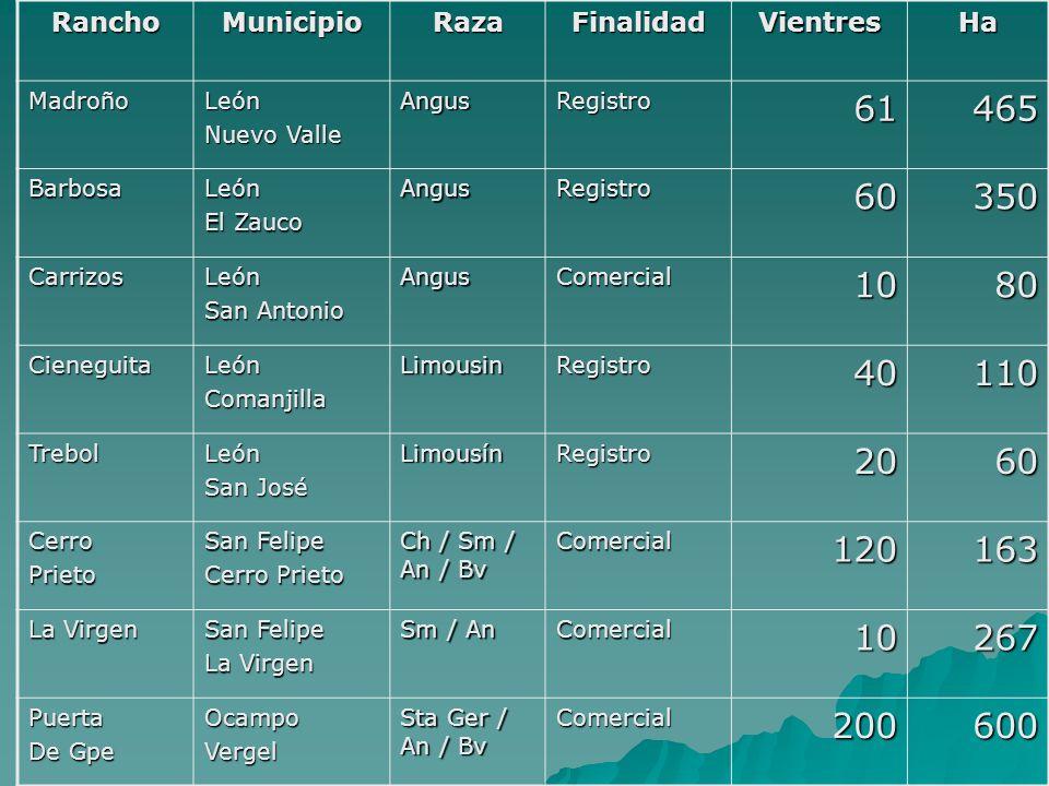 RanchoMunicipio. Raza. Finalidad. Vientres. Ha. Madroño. León. Nuevo Valle. Angus. Registro. 61. 465.