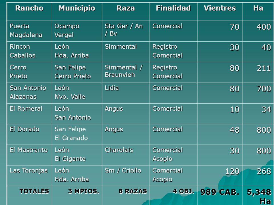Rancho Municipio. Raza. Finalidad. Vientres. Ha. Puerta. Magdalena. Ocampo. Vergel. Sta Ger / An / Bv.