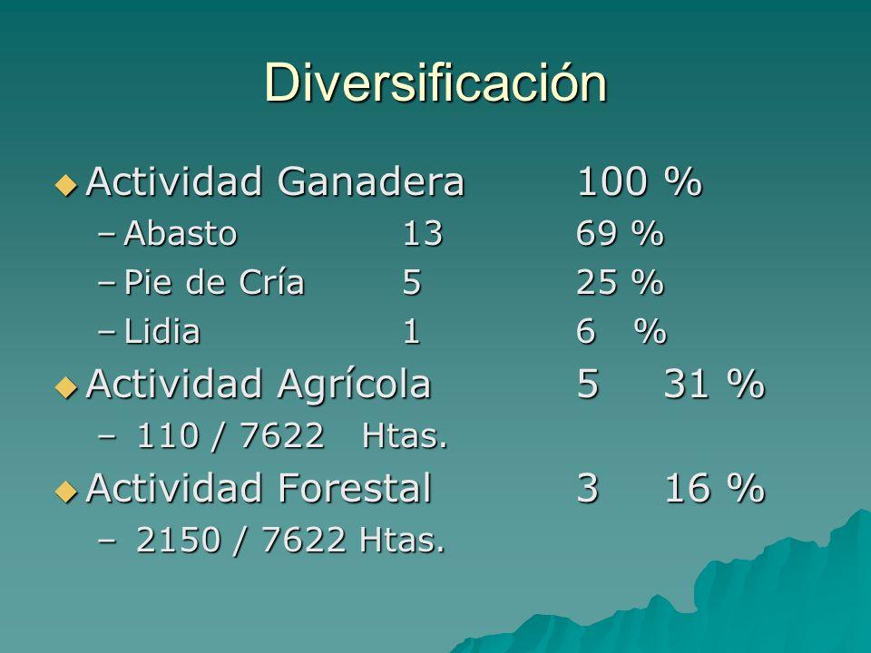 Diversificación Actividad Ganadera 100 % Actividad Agrícola 5 31 %