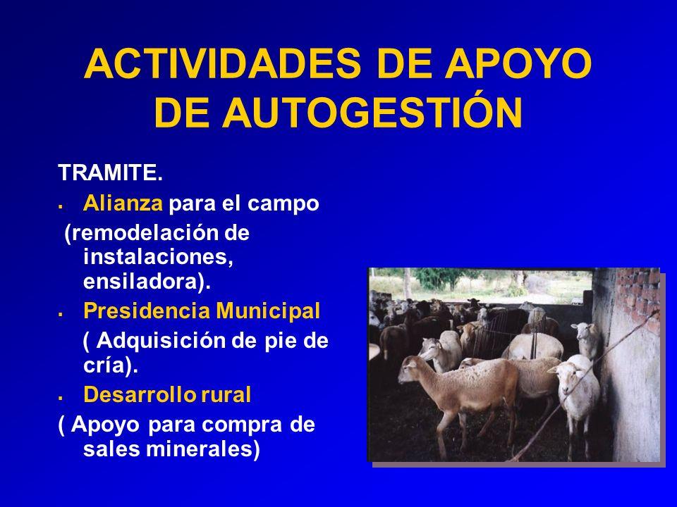 ACTIVIDADES DE APOYO DE AUTOGESTIÓN