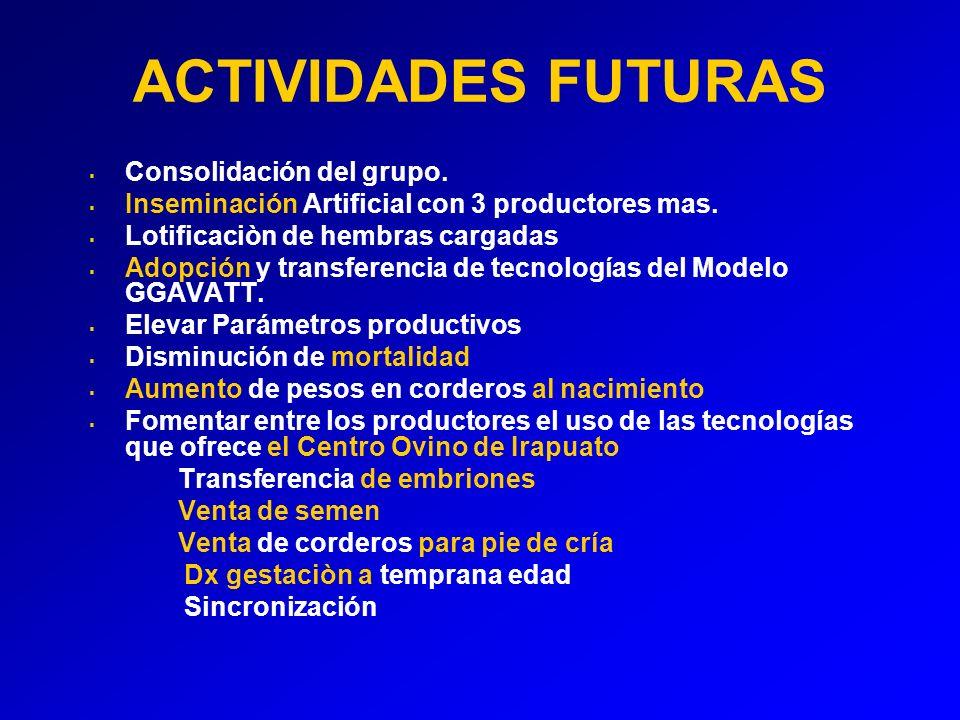 ACTIVIDADES FUTURAS Consolidación del grupo.