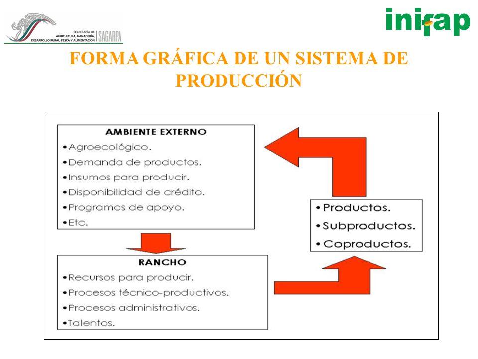 FORMA GRÁFICA DE UN SISTEMA DE PRODUCCIÓN