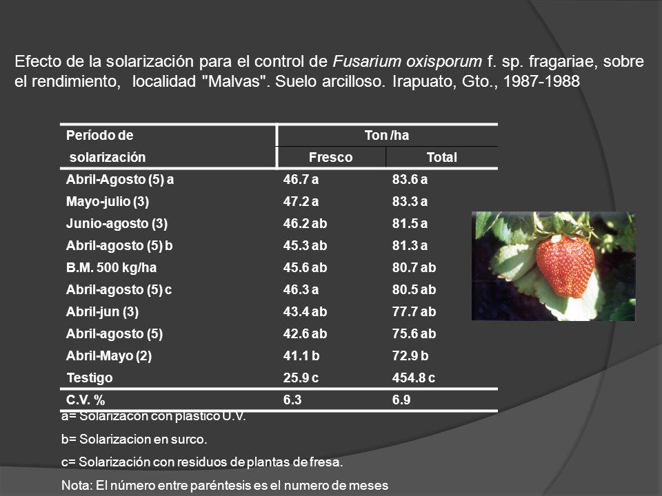 Efecto de la solarización para el control de Fusarium oxisporum f. sp