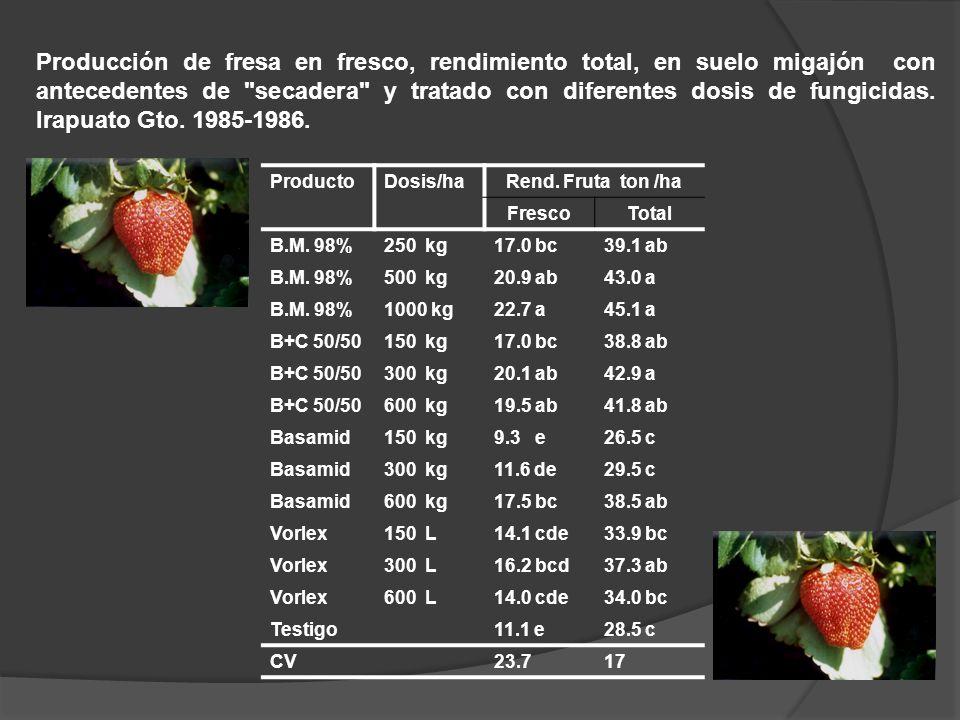 Producción de fresa en fresco, rendimiento total, en suelo migajón con antecedentes de secadera y tratado con diferentes dosis de fungicidas. Irapuato Gto. 1985-1986.