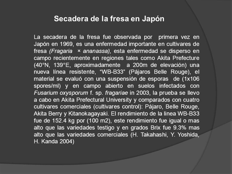 Secadera de la fresa en Japón