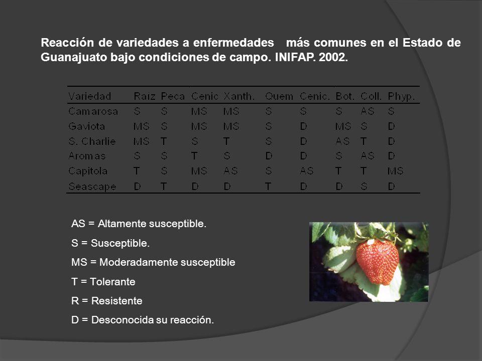 Reacción de variedades a enfermedades más comunes en el Estado de Guanajuato bajo condiciones de campo. INIFAP. 2002.