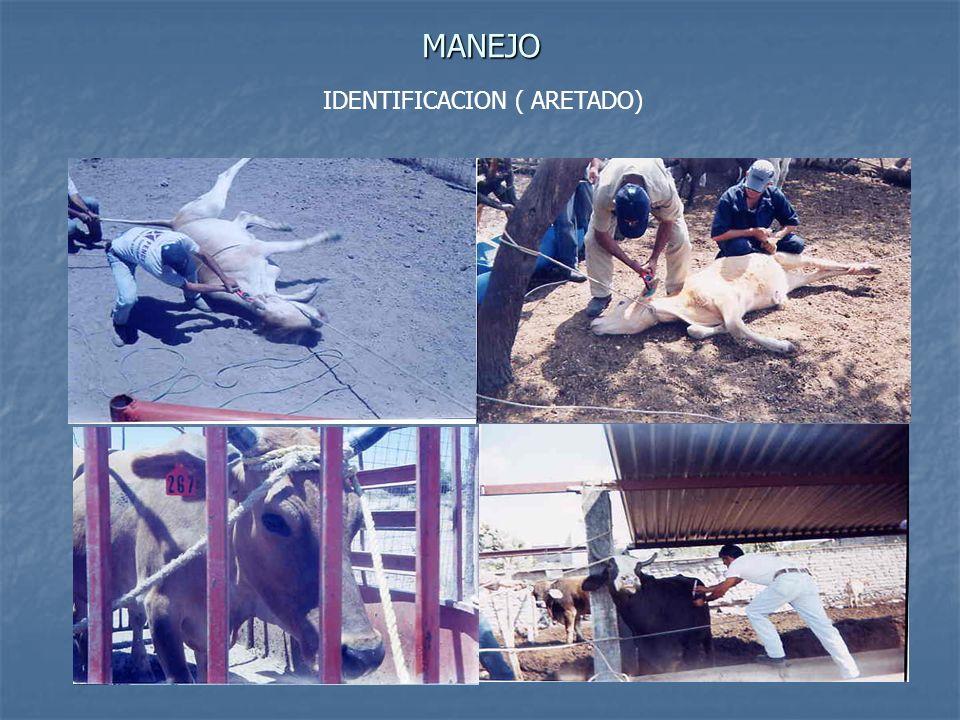 MANEJO IDENTIFICACION ( ARETADO)