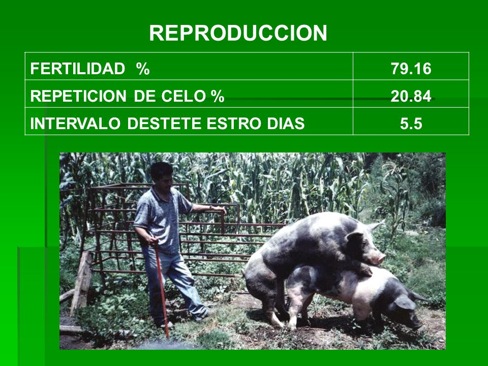 REPRODUCCION FERTILIDAD % 79.16 REPETICION DE CELO % 20.84