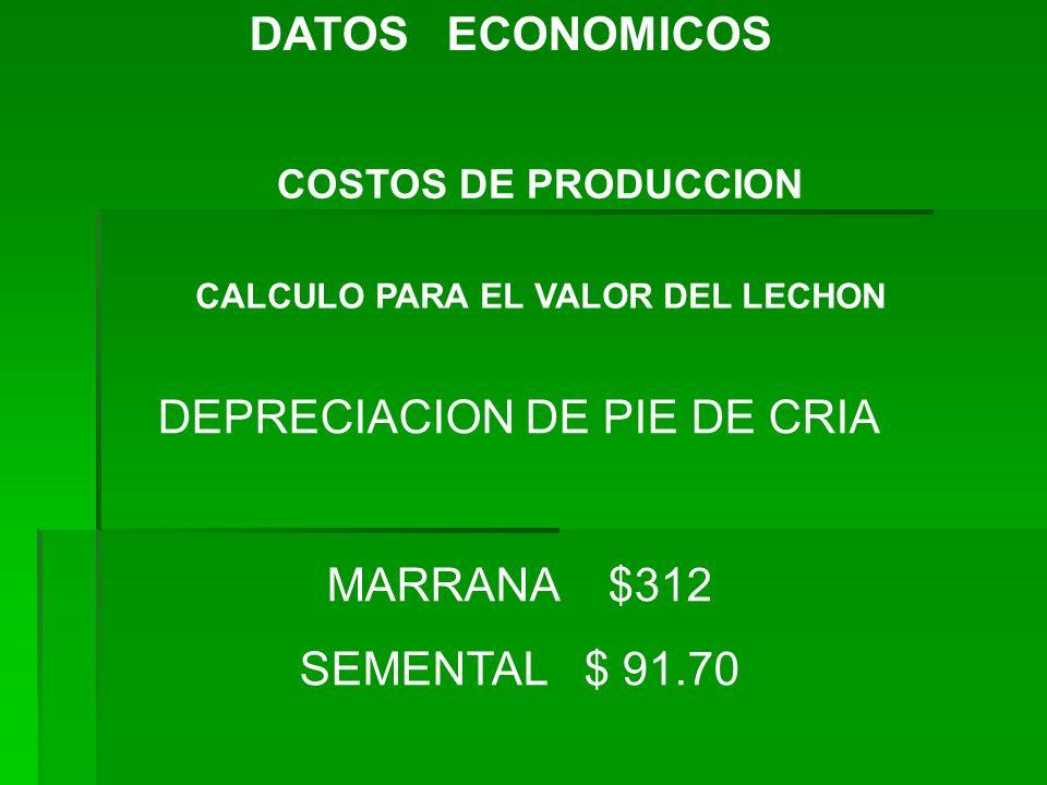 CALCULO PARA EL VALOR DEL LECHON