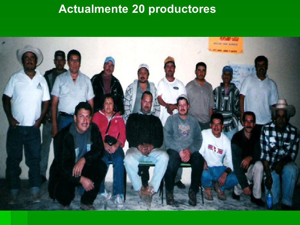 Actualmente 20 productores
