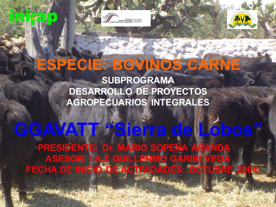 GGAVATT Sierra de Lobos