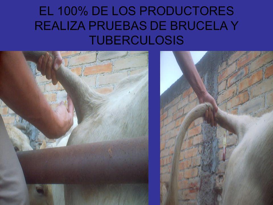 EL 100% DE LOS PRODUCTORES REALIZA PRUEBAS DE BRUCELA Y TUBERCULOSIS