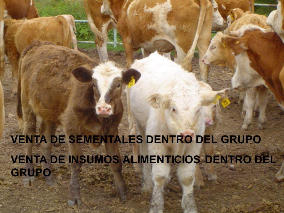 VENTA DE SEMENTALES DENTRO DEL GRUPO