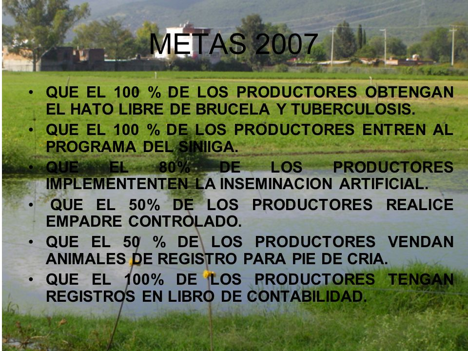 METAS 2007 QUE EL 100 % DE LOS PRODUCTORES OBTENGAN EL HATO LIBRE DE BRUCELA Y TUBERCULOSIS.