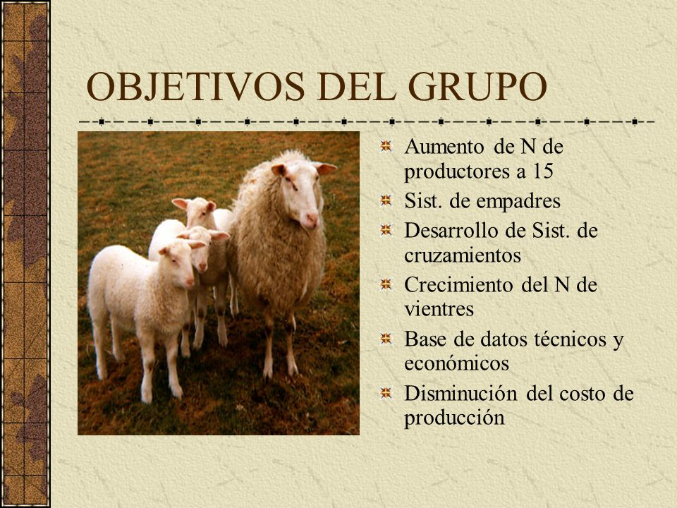 OBJETIVOS DEL GRUPO Aumento de N de productores a 15 Sist. de empadres