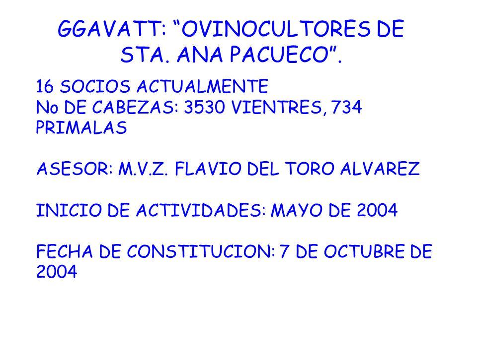 GGAVATT: OVINOCULTORES DE STA. ANA PACUECO .