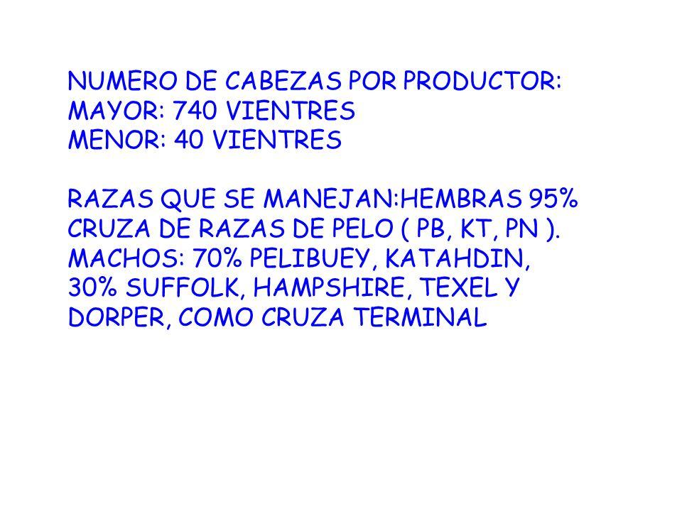 NUMERO DE CABEZAS POR PRODUCTOR: