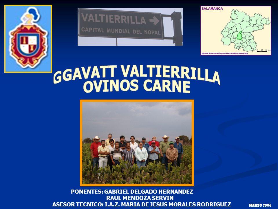 GGAVATT VALTIERRILLA OVINOS CARNE