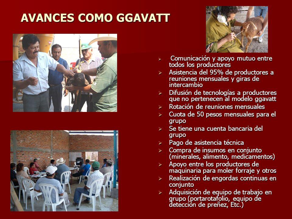 AVANCES COMO GGAVATT Comunicación y apoyo mutuo entre todos los productores.