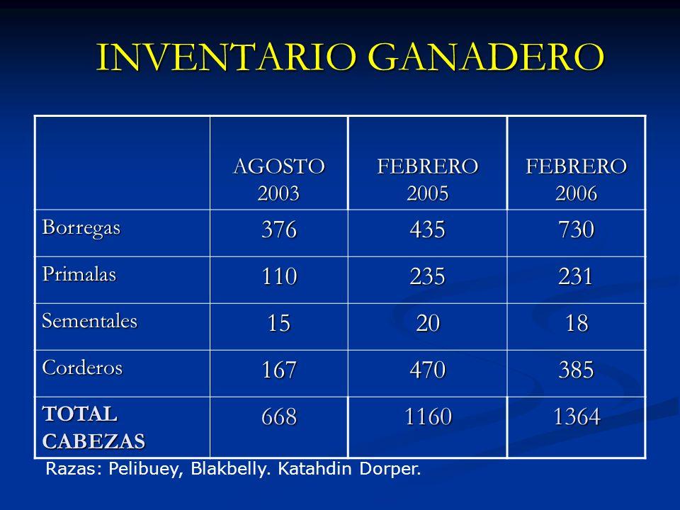 INVENTARIO GANADERO AGOSTO 2003. FEBRERO 2005. FEBRERO 2006. Borregas. 376. 435. 730. Primalas.