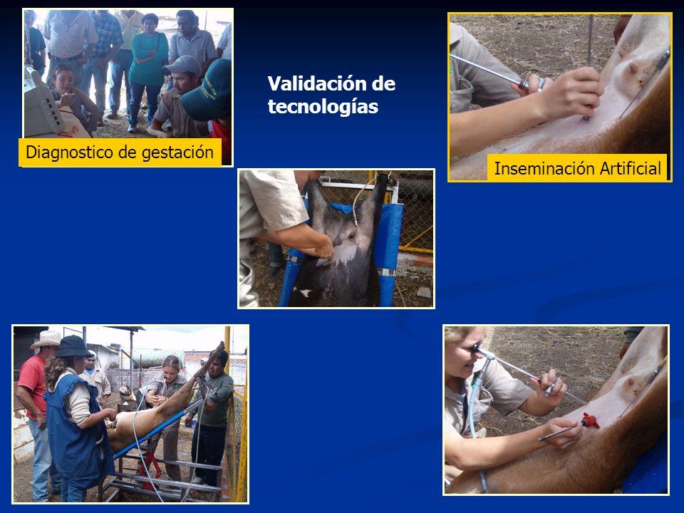 Validación de tecnologías Diagnostico de gestación